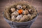 image of quail egg  - The wood basket filled with eggs and one orange egg of quails on wooden background - JPG