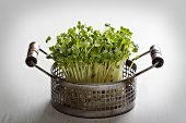 image of radish  - Bunch of radishes microgreens in a metal basket - JPG