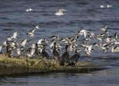 stock photo of marines  - Seabirds  - JPG