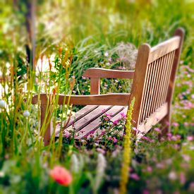 stock photo of wildflowers  - Wooden Bench in a wildflower garden - JPG