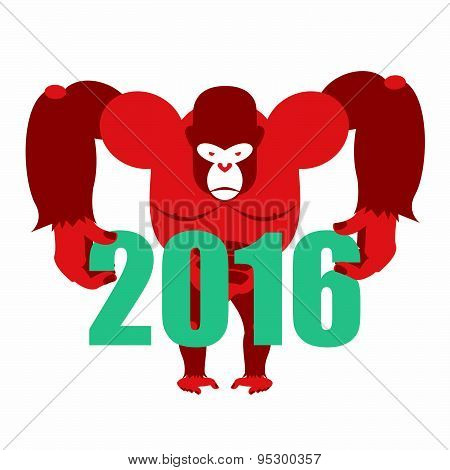 Gorilla keeps numbers 2016. Symbol of  new year red monkey. Vector illustration of African animal