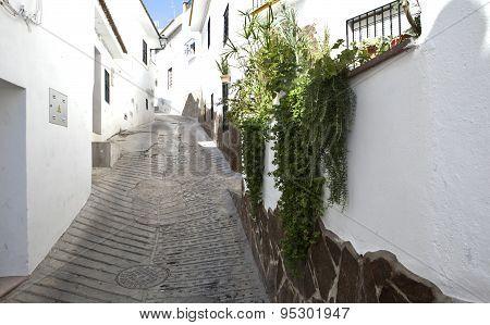 Guaro Streets