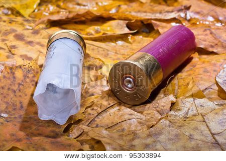 Two Shotgun Shell That Has Been Used On The Fallen Leaves