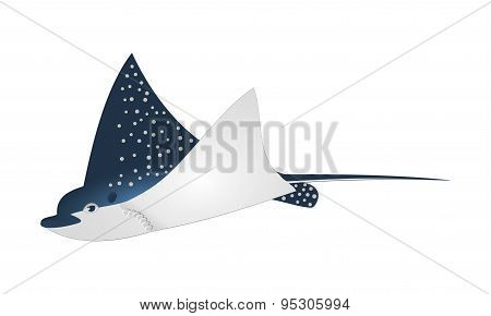 Manta ray fish vector illustration