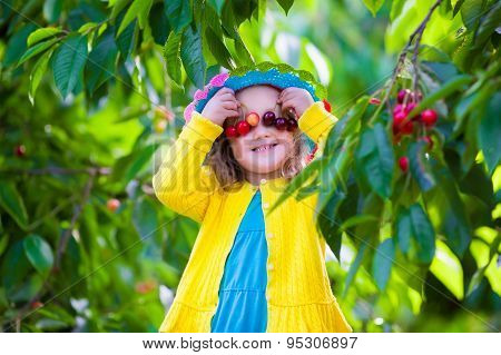 Little Girl Picking Fresh Cherry On A Farm