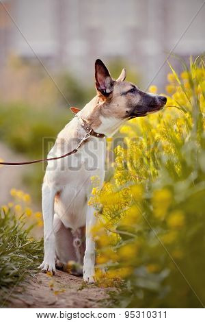Dog Smells Yellow Flowers.