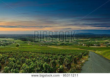 Sunrise On Vineyards, Beaujolais, France