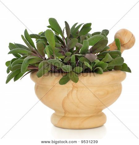 Sage Herb Leaf Sprigs