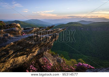 Rhododendron Spring Bloom in Linville Gorge
