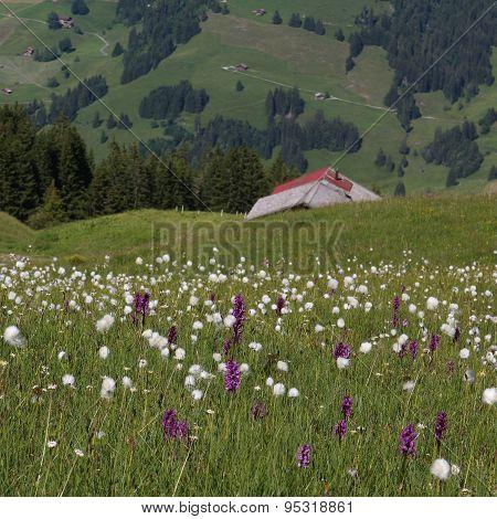 Wildflowers And Green Farmland
