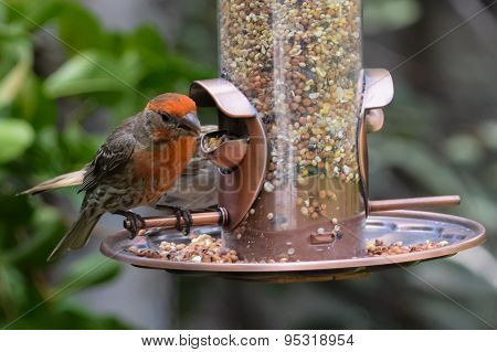 Backyard Bird Feeder