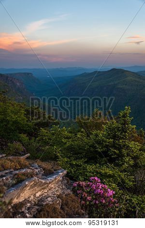 Rhododendron Spring Bloom in Linville Gorge 3