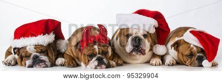 christmas dogs - cute Chrismas concept with one bad santa