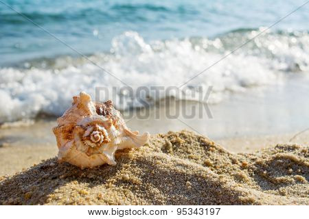 Shell on the beach and waves in a background