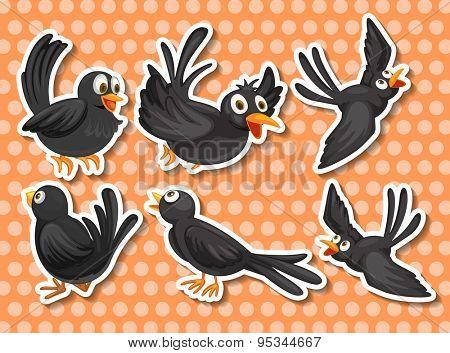 Little black bird in different position
