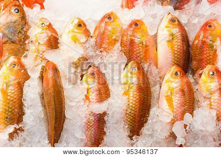 Fresh red snapper fish in market