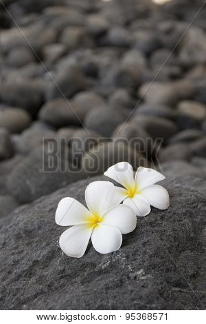 Plumeria flowers on the dark grey stone. Relax and spa treatment symbol