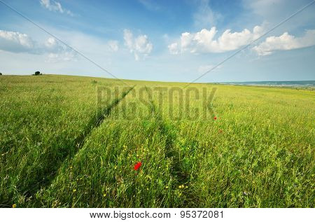 Green spring meadow and road lane in grass. Natural landscape composition.