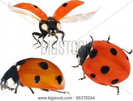 illustration with red ladybugs isolated on white background