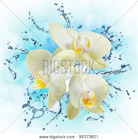White orchids on the water splash. Close up
