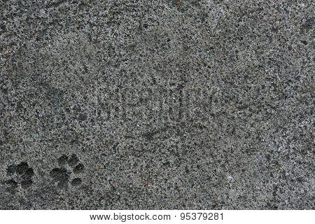 Cat Foot Print On Concrete Floor