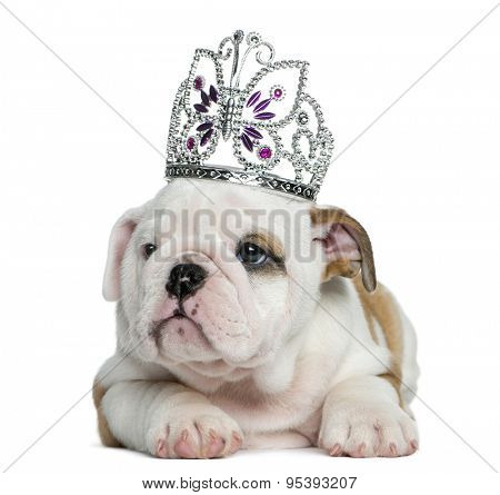 English bulldog puppy wearing a diadem in front of white background