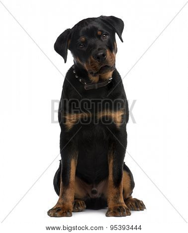 Rottweiler (9 months old) sitting in front of a white background