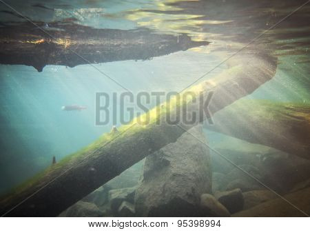 an underwater image of mossy logs and fish at a local nature center observatory through thick glass during summer on a sunny day