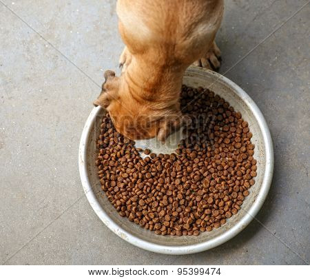 a puppy chowing down on dry dog food kibble in a metal bowl on concrete