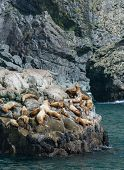 image of sea lion  - Around a dozen stellar sea lions are hanging out on a rock soaking up the Alaskan sun - JPG