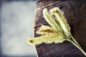 stock photo of dry grass  - Dry grass flower on wooden table - JPG