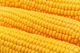 picture of sweet-corn  - Macro view of fresh yellow sweet corn or maize - JPG