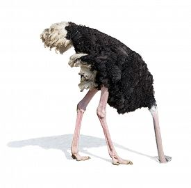 foto of ignore  - ostrich burying head in sand ignoring problems - JPG