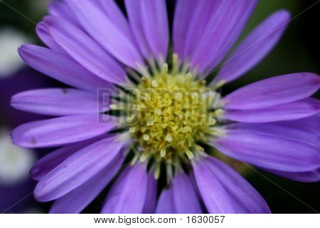 Yellow & Pruple Flower
