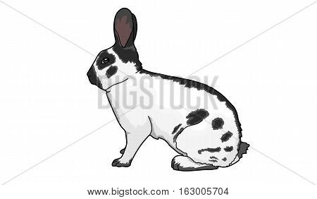 The white rabbit with black spots. The long black ears.