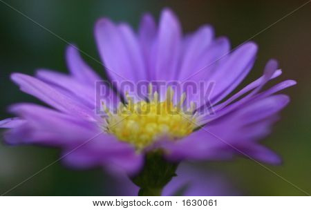 Purple & Yellow Flower2