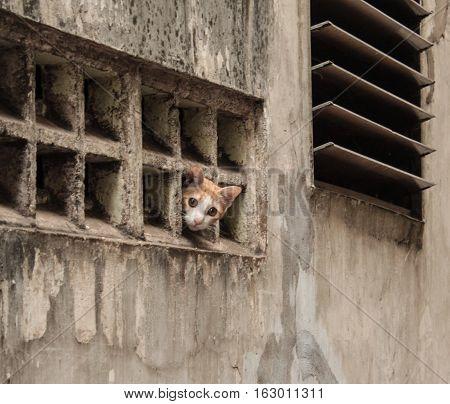 little kitty / cat looking through window