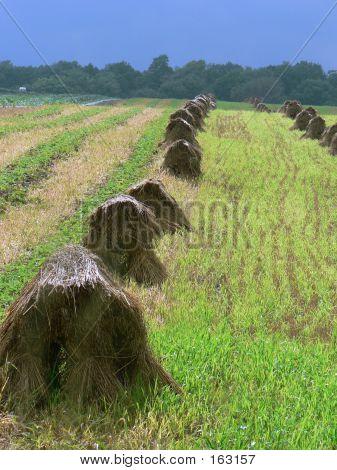 Haystack 3