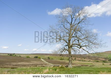 The Moors Tree