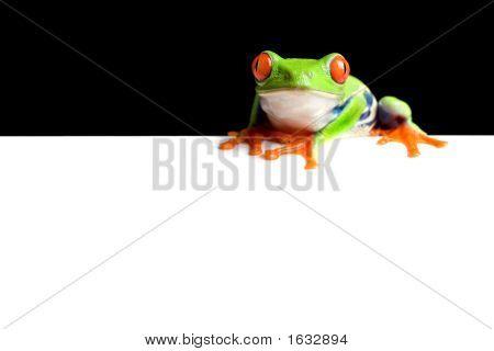 Frog-Grenze