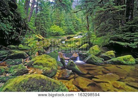 Creek in Northern temperate Rain forest Princess Royal Island West-coast British Columbia