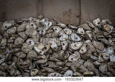 Oyster Shells Against Wall in an industrial fishing area