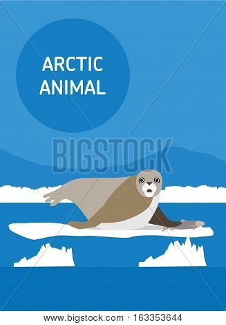 The seal lies on an ice floe. Vector drawing of a series of Arctic animals. Flat style illustration
