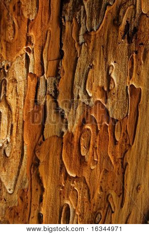textured old wood close up
