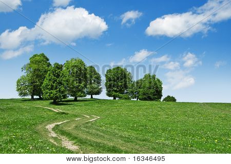 road and tree on green field