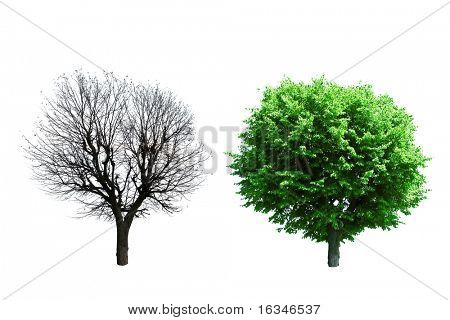 summer and autumn trees isolated