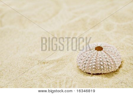 beauty sea background with cockleshell
