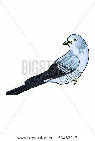 Blue cuckoo with motley plumage on the white background.