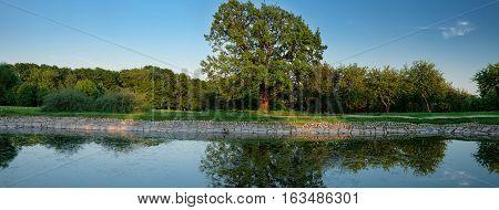 Ancient Oak-tree