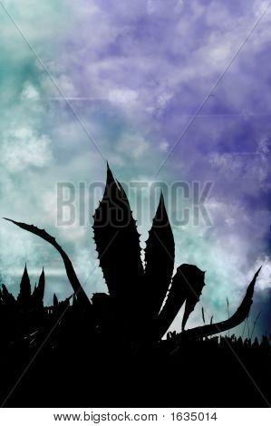 Silhouette Of Cactus